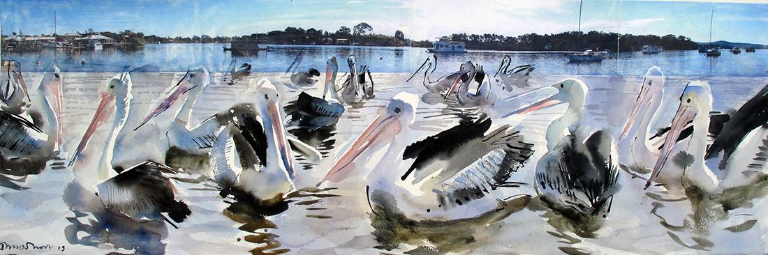 Pelicans-at-Noosa,-Queensland,-Australia
